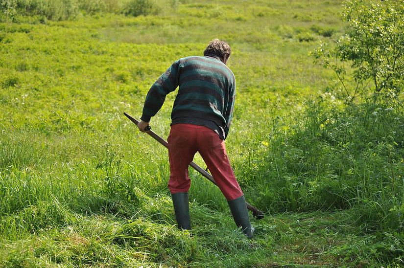 mowing-1532931.jpg