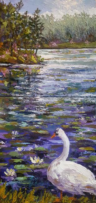 Swan At Bass Lake
