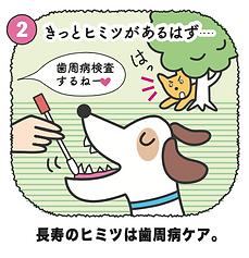 犬の歯周病ケア