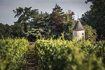 chateau-senejac-vignoble-haut-medoc