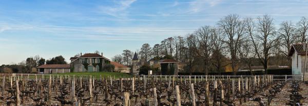 chateau sénéjac vignes