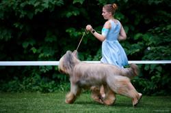бриар собака