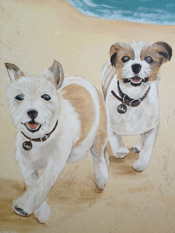 Closeup of dogs