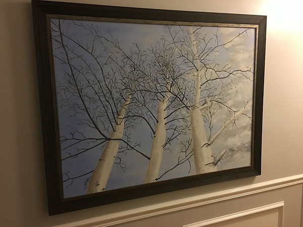 johns trees.JPG