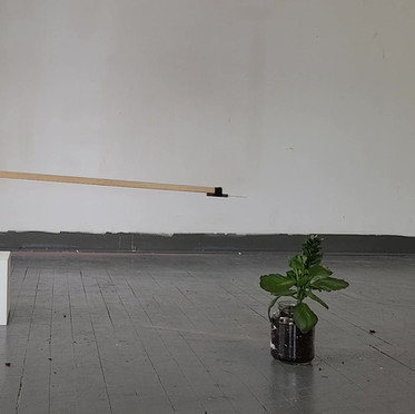 Dimensions: 17in. x 6ft.x 6ft. Materials: Pine, motor, knife, house plant Year: 2021