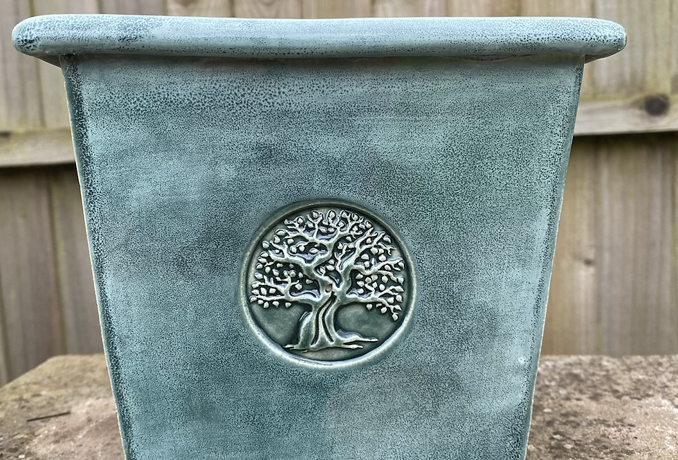 Green old tree planter