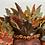Thumbnail: Autumn Queen