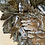 Thumbnail: Bracket fungus Green man