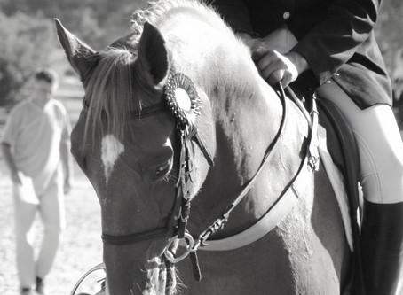 "Mettre "" en place "" son cheval"