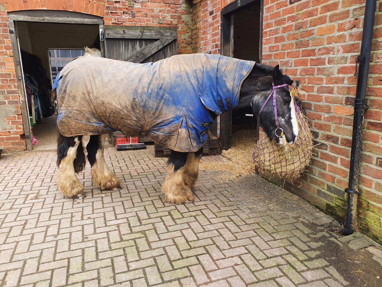 muddy horse