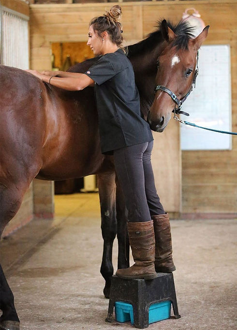 horse-physiotherapy-2.jpg