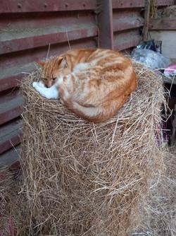 its my hay