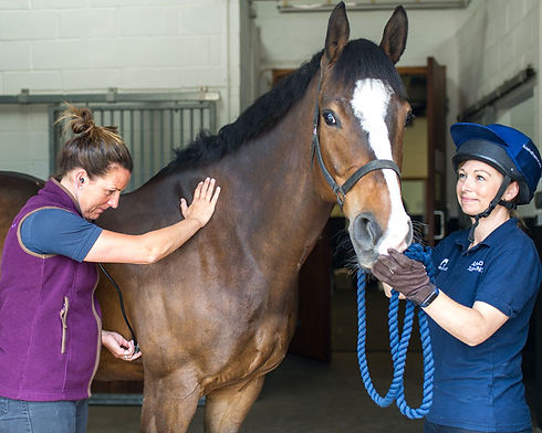 equine-vet-and-nurse-with-horse.jpg