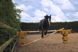 Misty free jumping
