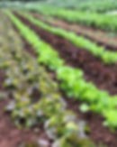 Greenflash Farm NewJersey Organics