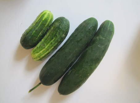 Cucumber, Cabbage, and Radish Salad