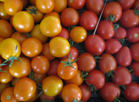 Tomato and Cucumber Salad with Parsley