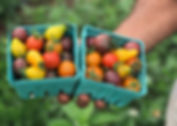 Greenflash Farm New Jersey Organics