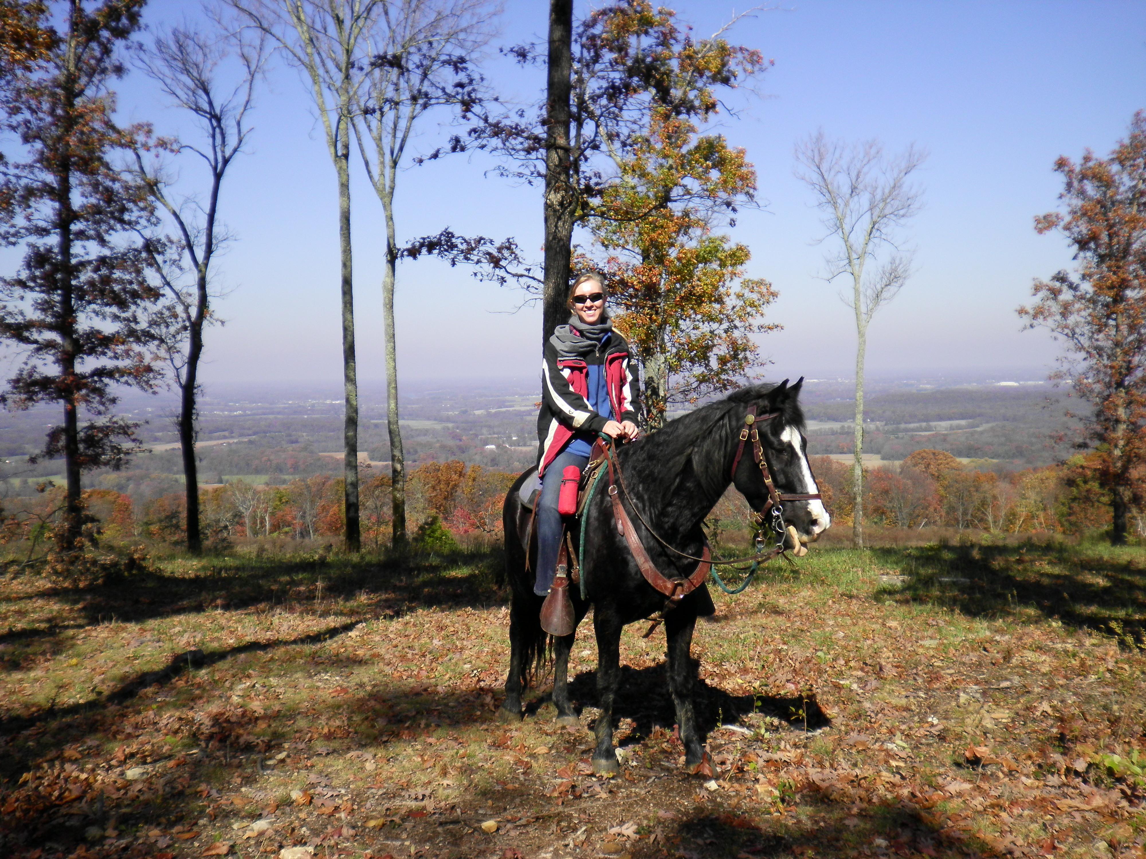 Horses_Bckgrnd_2