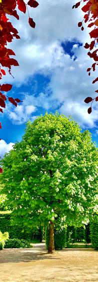 view of tree in full bloom in amstelpark