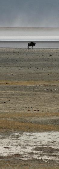 Tanzania   trekking wilderbeasts in the Serengeti