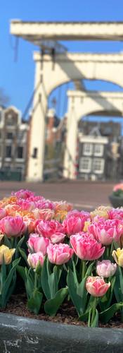 magere brug met tulpen op voorgrond