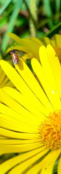 zon op gele bloem met insect in amstelpark