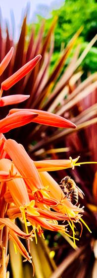 bee on a beautiful orange flower