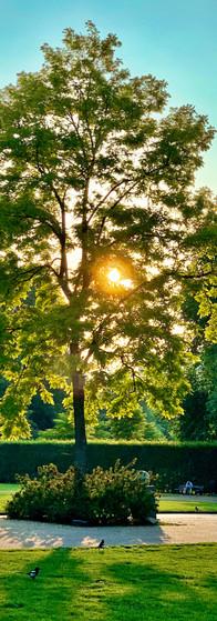 amstelpark summer evening sun through tree