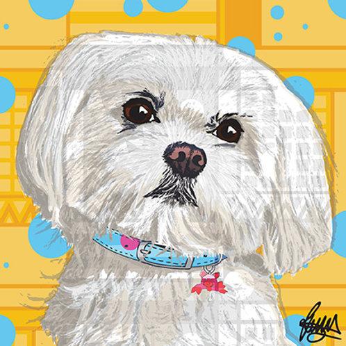Sydney Mi-ki Dog