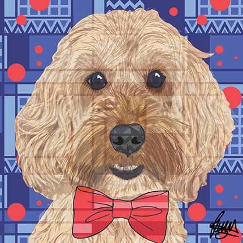 Freddie Cockapoo Dog