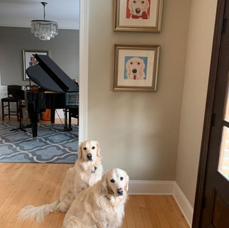 8a Max and Rosie Golden Retriever with a