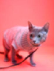 Newsletter Cats Kiki.jpg
