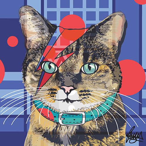 Bowie Tabby Cat