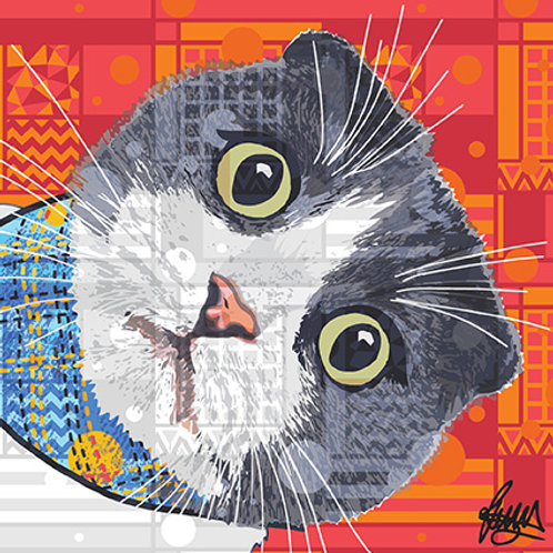 Kazuo Scottish Fold Cat