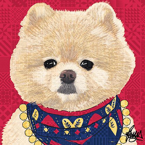 Cedric Pomeranian Dog
