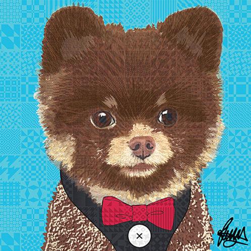 Kobe Chocolate Pomeranian