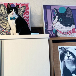 Rose Hill Designs Drop B&W cat with artw