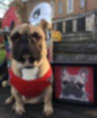Make Your Pet Famous Artworks of Eroc Eric Skateboarding French Bulldog dog