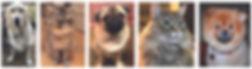 Rose Hill Designs Make your pet famous p