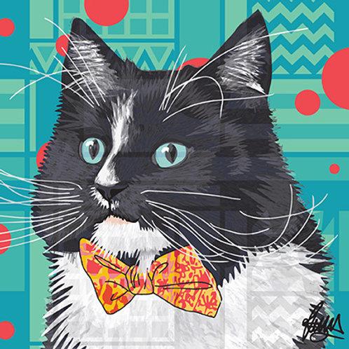 Erwin Black & White Maincoon Cat