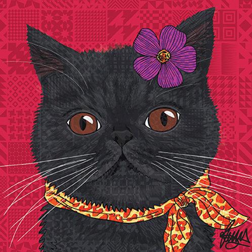 Ciccio Cat