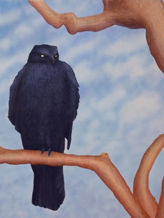 Golden Eyed Black Hawk