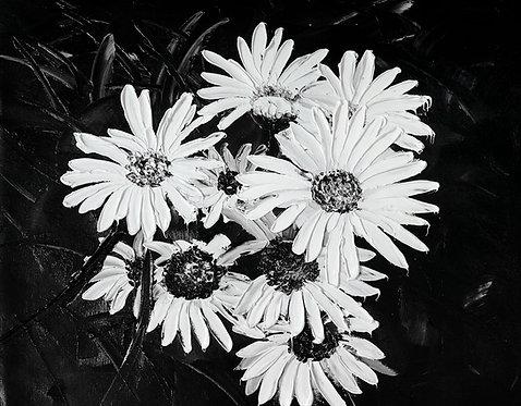 daisies en noir painting