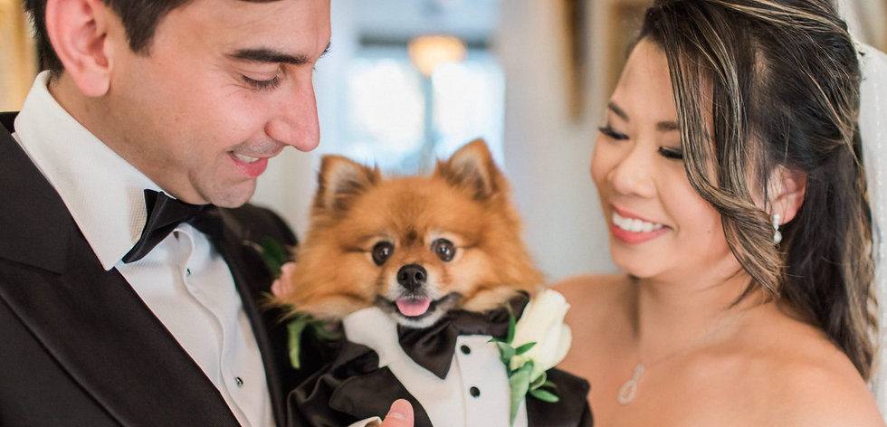 Dogs-Weddings_edited.jpg