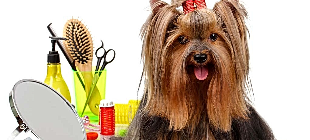 My-Favorite-Dog-Grooming-Products2-1021x