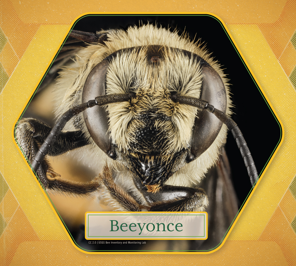 Adopt-A-Bee_Beeyonce-