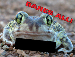 Naked-Frog