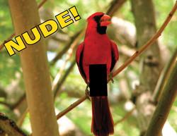 Naked-Cardinal