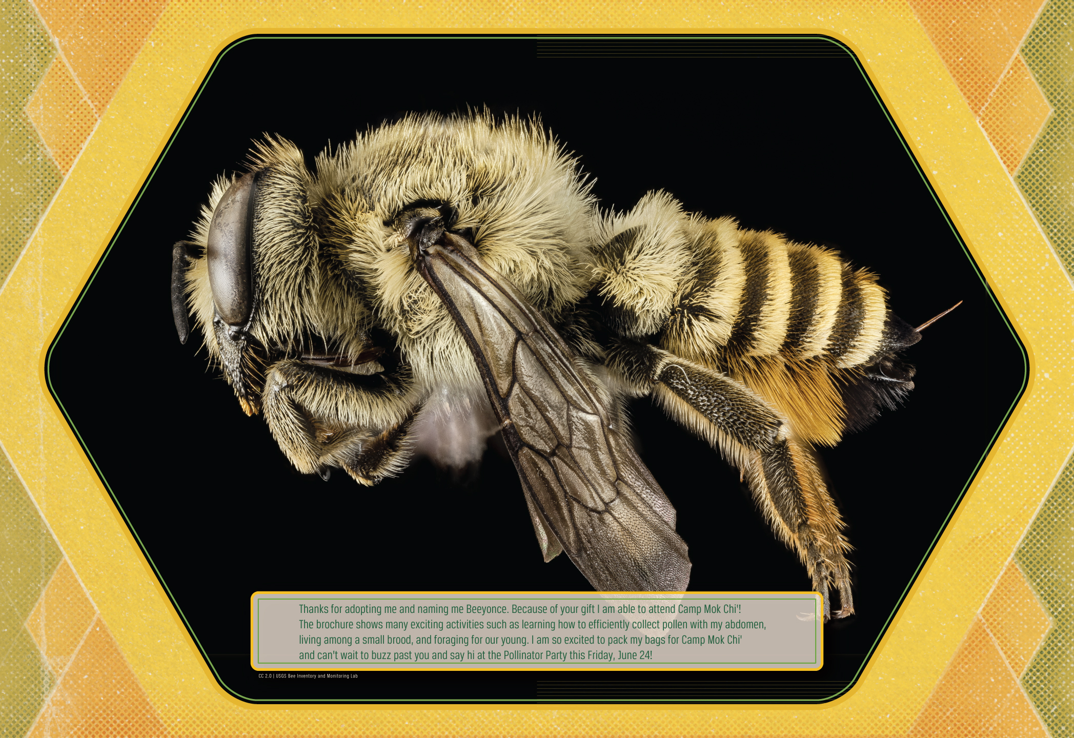 Adopt-A-Bee_Beeyonce_Thank-You